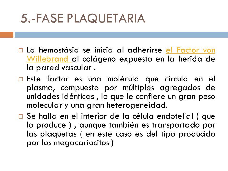 5.-FASE PLAQUETARIA La hemostásia se inicia al adherirse el Factor von Willebrand al colágeno expuesto en la herida de la pared vascular.el Factor von Willebrand Este factor es una molécula que circula en el plasma, compuesto por múltiples agregados de unidades idénticas, lo que le confiere un gran peso molecular y una gran heterogeneidad.