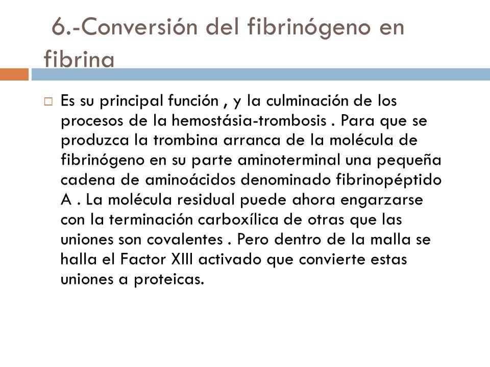 6.-Conversión del fibrinógeno en fibrina Es su principal función, y la culminación de los procesos de la hemostásia-trombosis.
