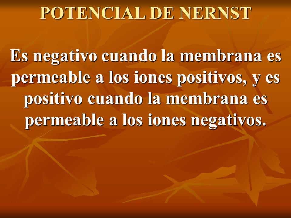 POTENCIAL DE NERNST Es negativo cuando la membrana es permeable a los iones positivos, y es positivo cuando la membrana es permeable a los iones negat