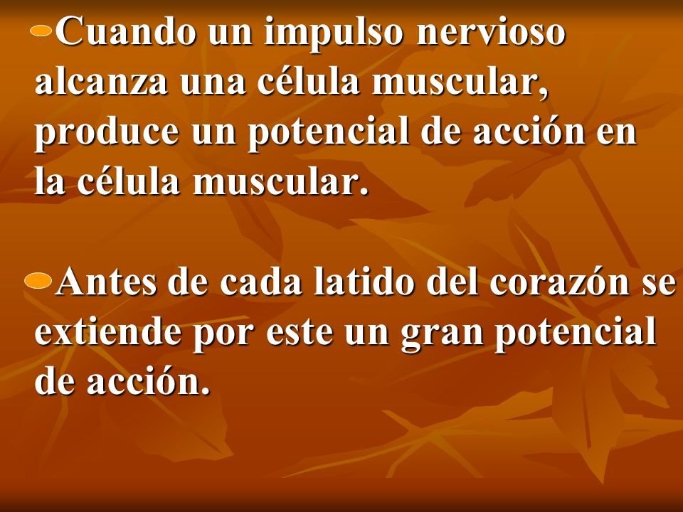 Cuando un impulso nervioso alcanza una célula muscular, produce un potencial de acción en la célula muscular. Antes de cada latido del corazón se exti