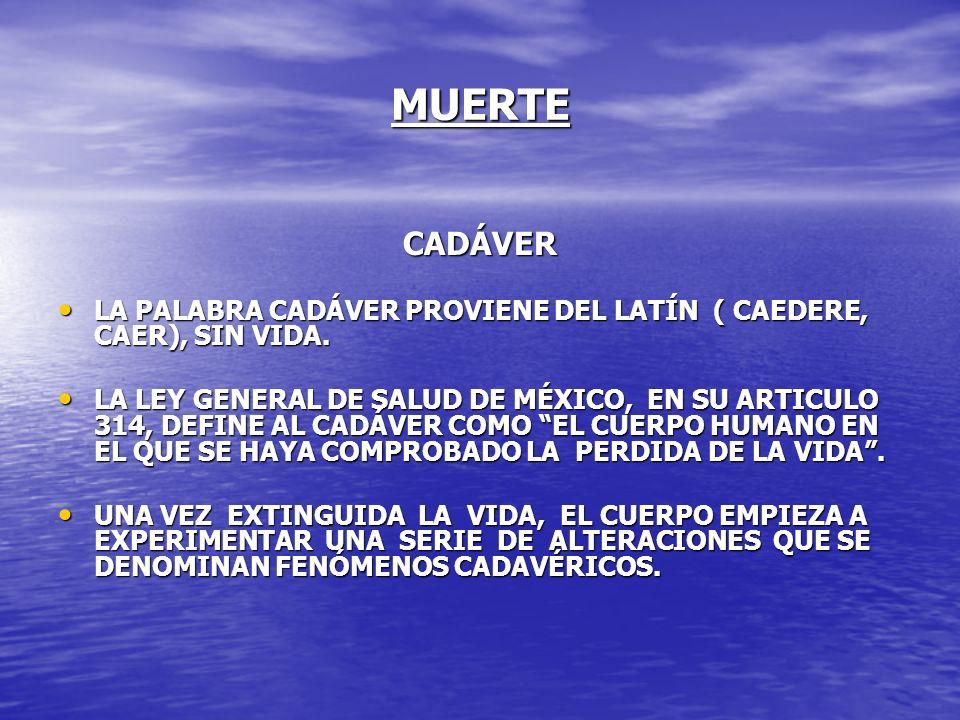 MUERTE CADÁVER LA PALABRA CADÁVER PROVIENE DEL LATÍN ( CAEDERE, CAER), SIN VIDA. LA PALABRA CADÁVER PROVIENE DEL LATÍN ( CAEDERE, CAER), SIN VIDA. LA