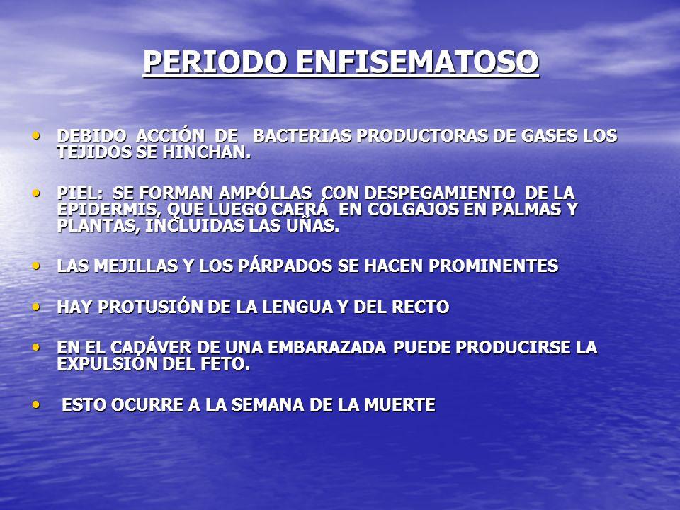PERIODO ENFISEMATOSO DEBIDO ACCIÓN DE BACTERIAS PRODUCTORAS DE GASES LOS TEJIDOS SE HINCHAN. DEBIDO ACCIÓN DE BACTERIAS PRODUCTORAS DE GASES LOS TEJID