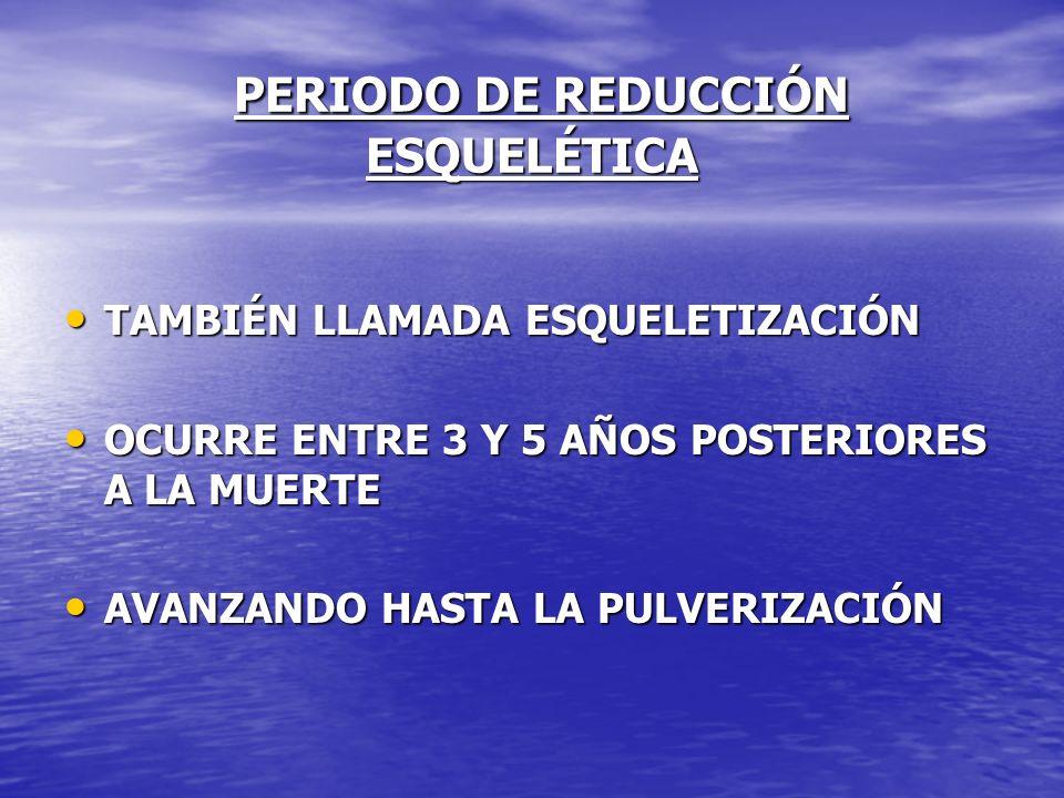 PERIODO DE REDUCCIÓN ESQUELÉTICA PERIODO DE REDUCCIÓN ESQUELÉTICA TAMBIÉN LLAMADA ESQUELETIZACIÓN TAMBIÉN LLAMADA ESQUELETIZACIÓN OCURRE ENTRE 3 Y 5 A