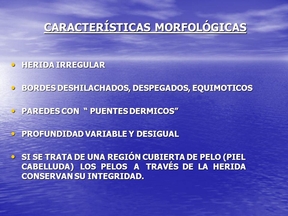 CARACTERÍSTICAS MORFOLÓGICAS HERIDA IRREGULAR HERIDA IRREGULAR BORDES DESHILACHADOS, DESPEGADOS, EQUIMOTICOS BORDES DESHILACHADOS, DESPEGADOS, EQUIMOT
