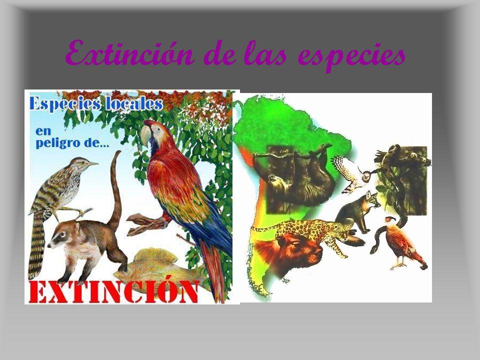 Conclusión: En la actualidad la extinción de las especies es un problema q se ha ido intensificando cada vez mas, el cual no ha sido tomado con gran interés por las personas, ya que al ser un problema que no los afecta directamente estos no se interesan por buscar soluciones.