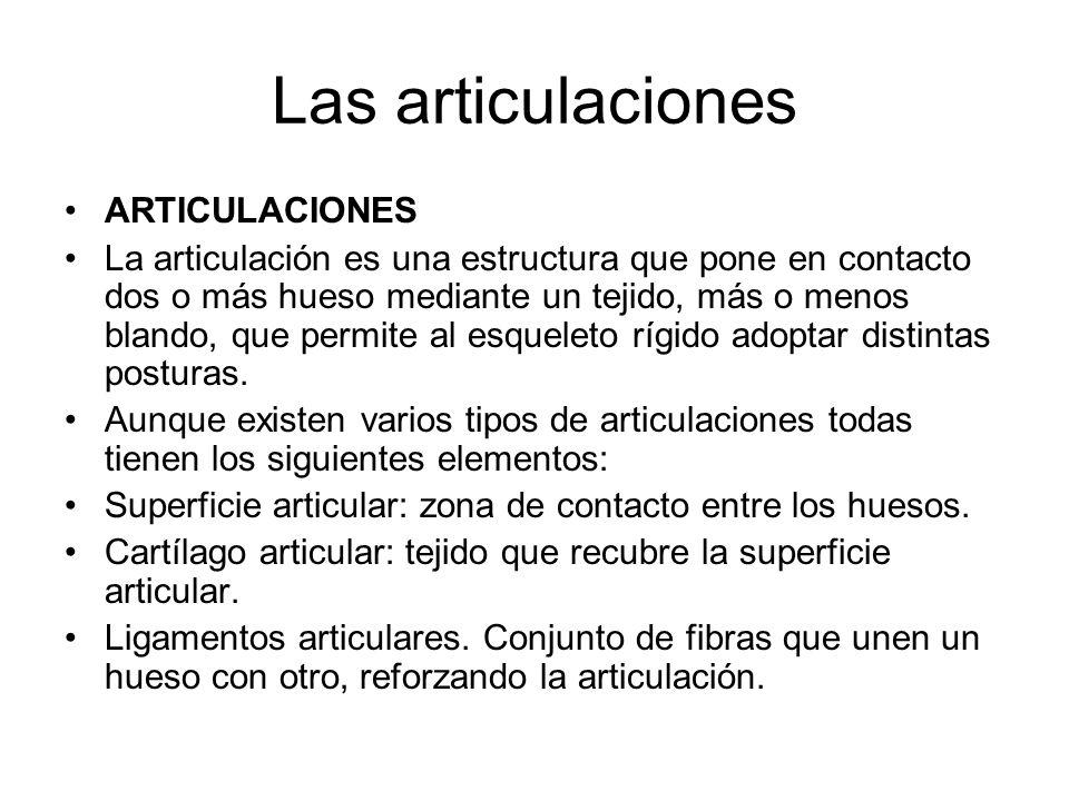 Las articulaciones ARTICULACIONES La articulación es una estructura que pone en contacto dos o más hueso mediante un tejido, más o menos blando, que permite al esqueleto rígido adoptar distintas posturas.