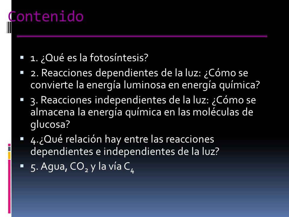 Contenido 1.¿Qué es la fotosíntesis. 2.