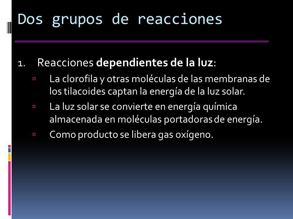 Dos grupos de reacciones 1.