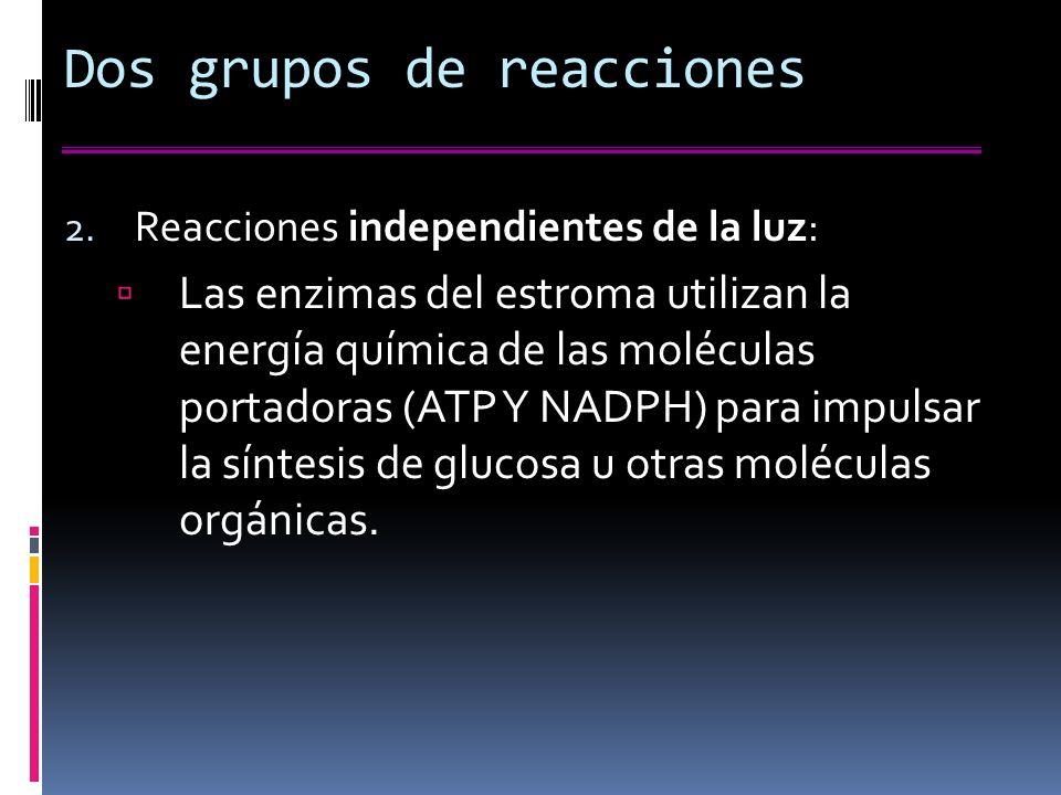Dos grupos de reacciones 2.