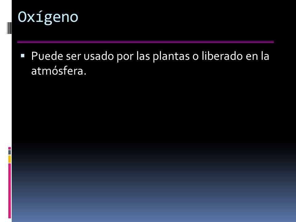 Oxígeno Puede ser usado por las plantas o liberado en la atmósfera.
