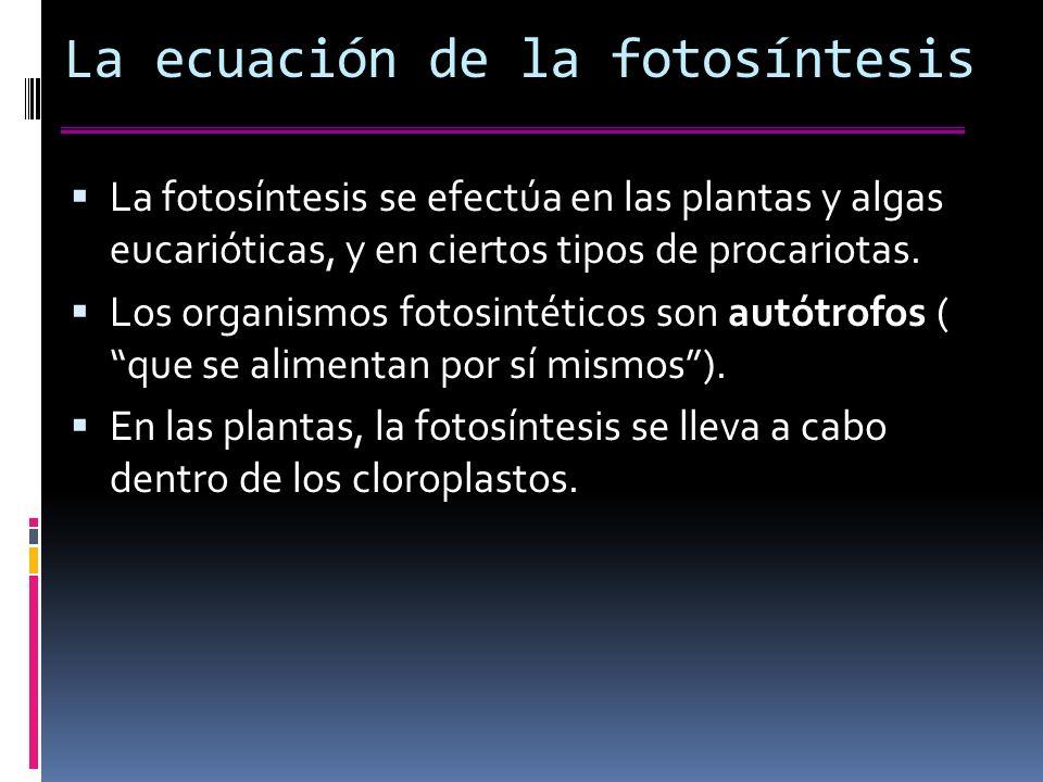 La ecuación de la fotosíntesis La fotosíntesis se efectúa en las plantas y algas eucarióticas, y en ciertos tipos de procariotas.
