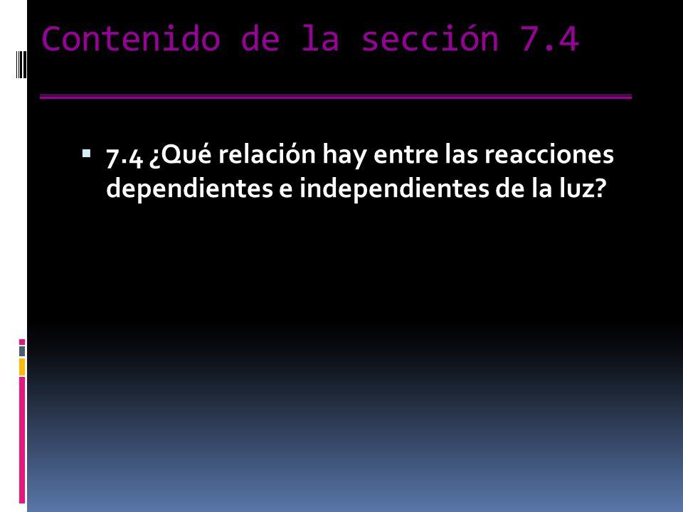 Contenido de la sección 7.4 7.4 ¿Qué relación hay entre las reacciones dependientes e independientes de la luz?