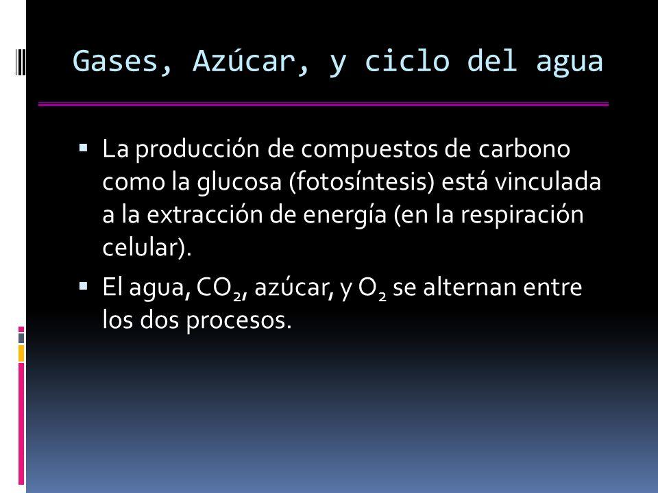 Gases, Azúcar, y ciclo del agua La producción de compuestos de carbono como la glucosa (fotosíntesis) está vinculada a la extracción de energía (en la respiración celular).