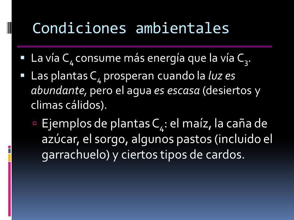 Condiciones ambientales La vía C 4 consume más energía que la vía C 3.
