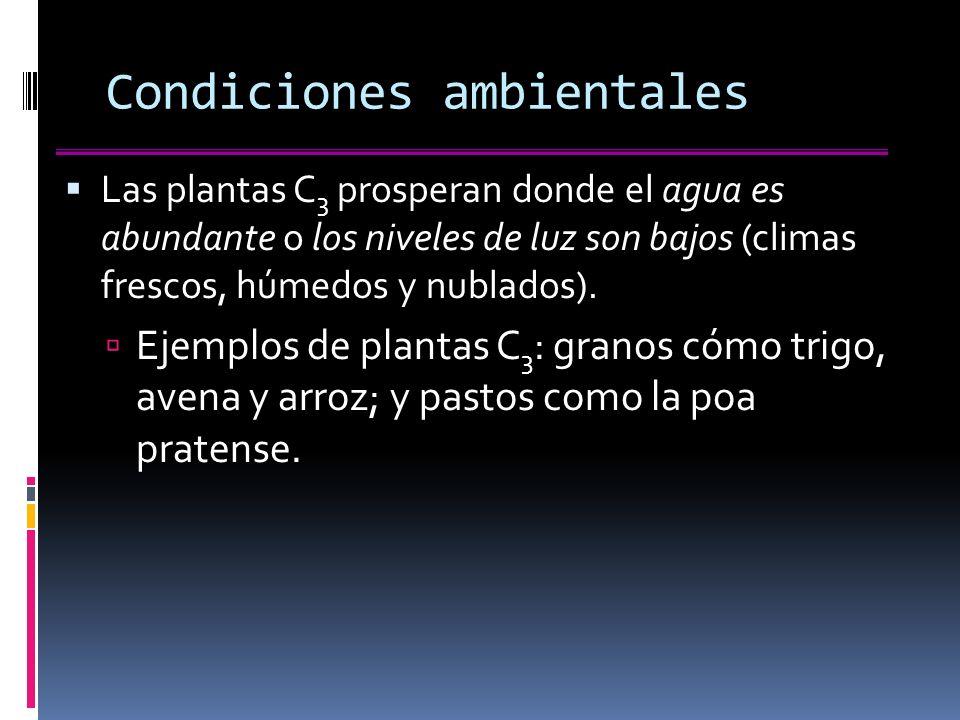 Condiciones ambientales Las plantas C 3 prosperan donde el agua es abundante o los niveles de luz son bajos (climas frescos, húmedos y nublados).