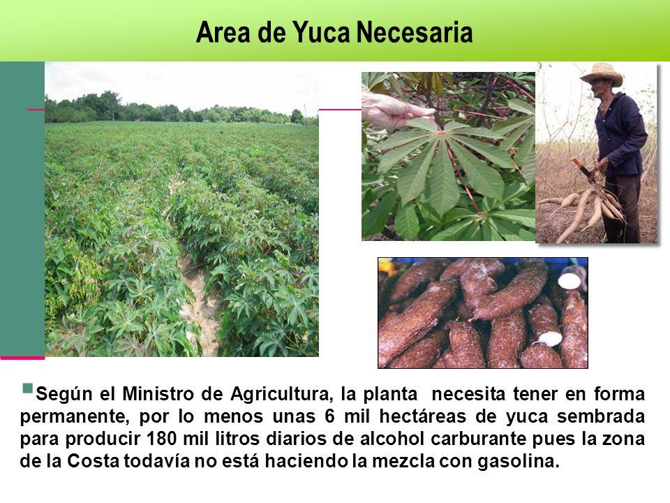 Según el Ministro de Agricultura, la planta necesita tener en forma permanente, por lo menos unas 6 mil hectáreas de yuca sembrada para producir 180 m