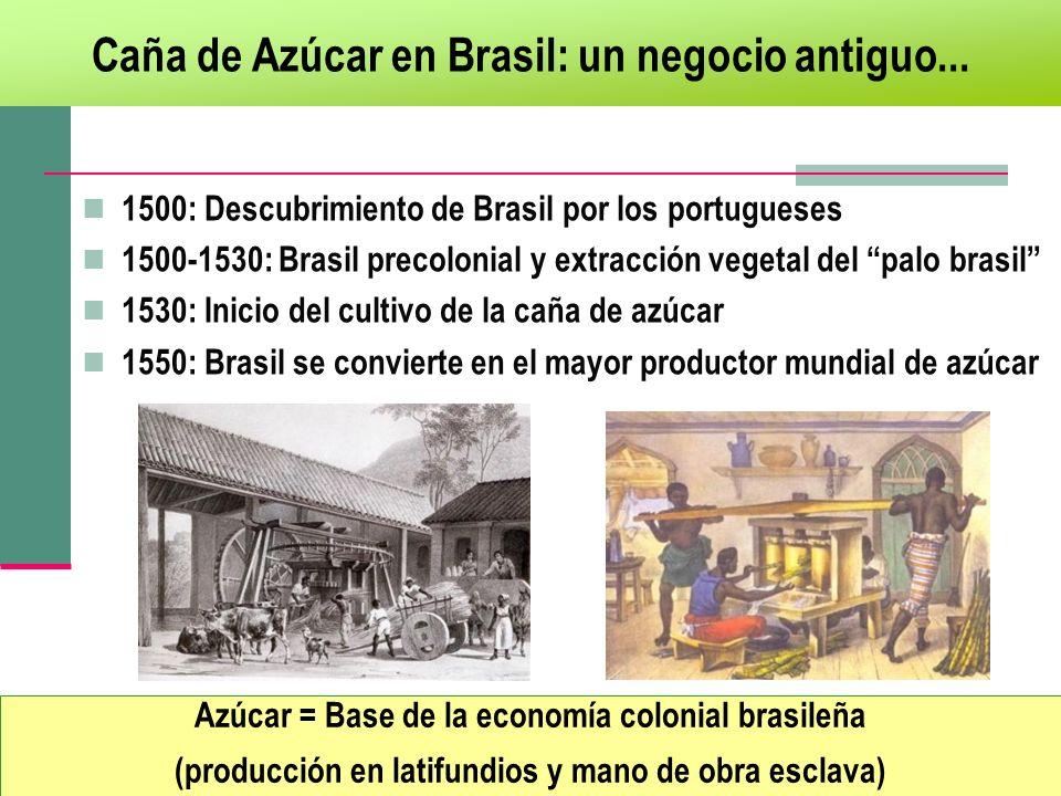 Caña de Azúcar en Brasil: un negocio antiguo... Azúcar = Base de la economía colonial brasileña (producción en latifundios y mano de obra esclava) 150