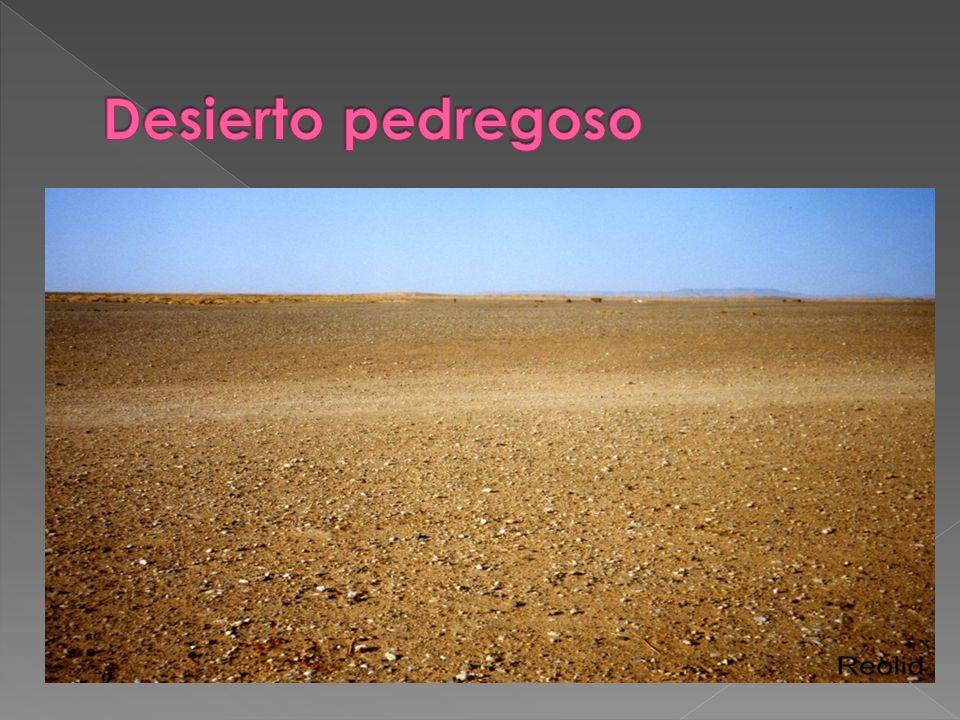 Formado por grandes extensiones de arena, que se acumula originando dunas.