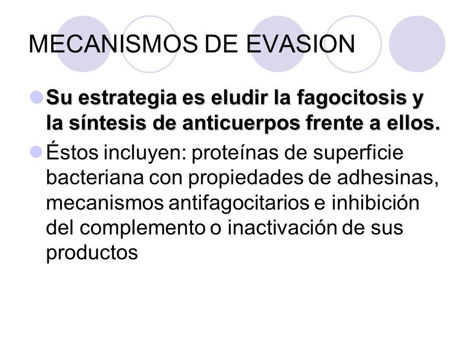 MECANISMOS DE EVASION Su estrategia es eludir la fagocitosis y la síntesis de anticuerpos frente a ellos. Su estrategia es eludir la fagocitosis y la