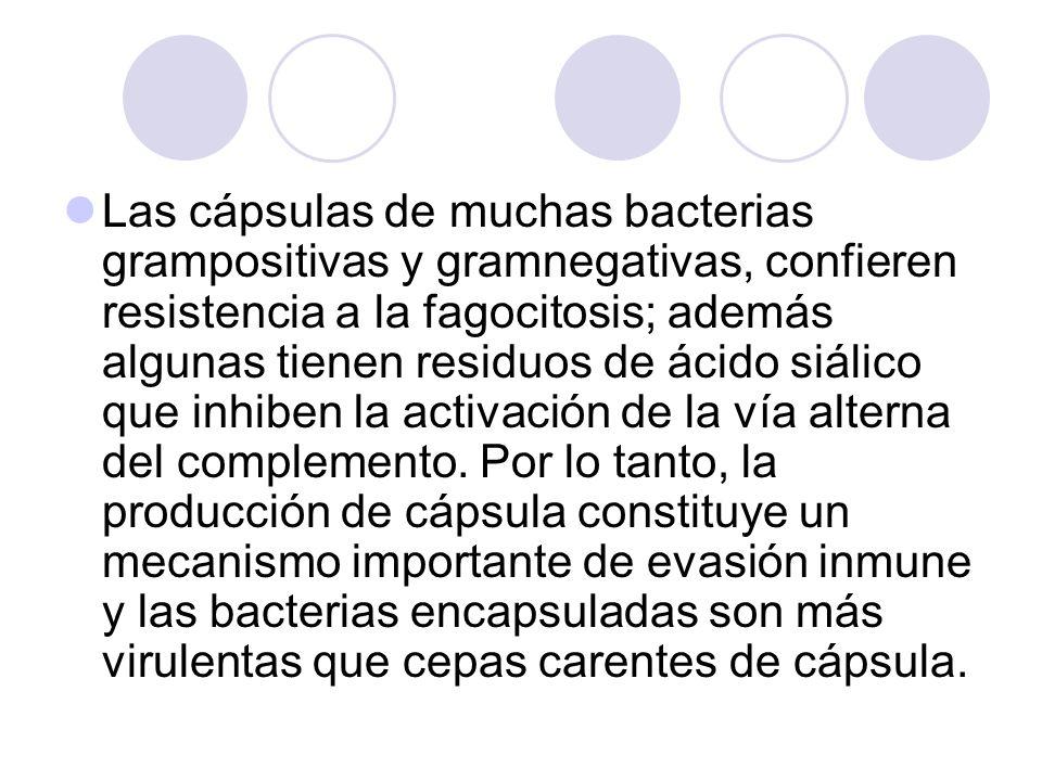 Las cápsulas de muchas bacterias grampositivas y gramnegativas, confieren resistencia a la fagocitosis; además algunas tienen residuos de ácido siálic
