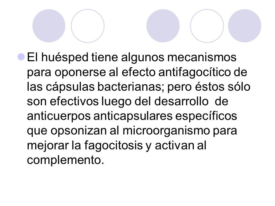 El huésped tiene algunos mecanismos para oponerse al efecto antifagocítico de las cápsulas bacterianas; pero éstos sólo son efectivos luego del desarr