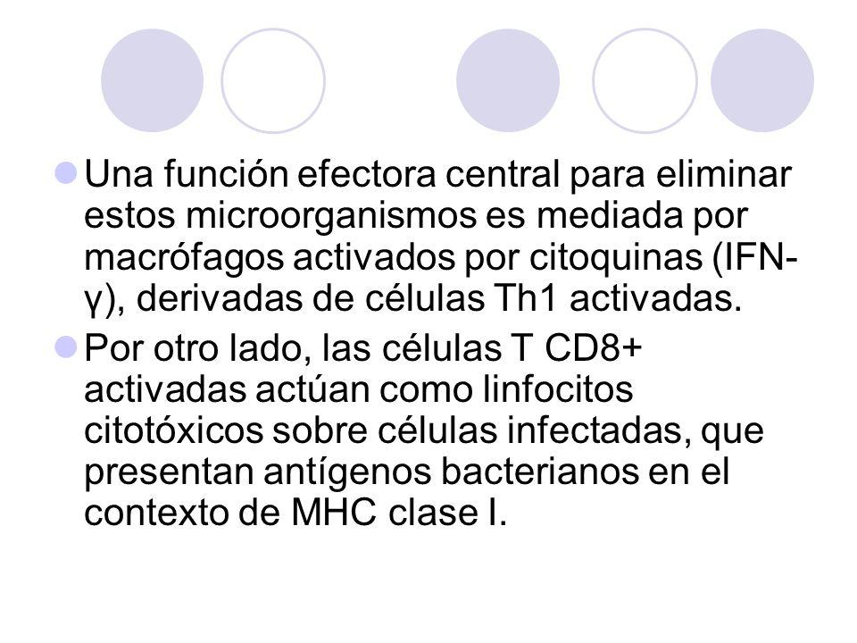 Una función efectora central para eliminar estos microorganismos es mediada por macrófagos activados por citoquinas (IFN- γ), derivadas de células Th1
