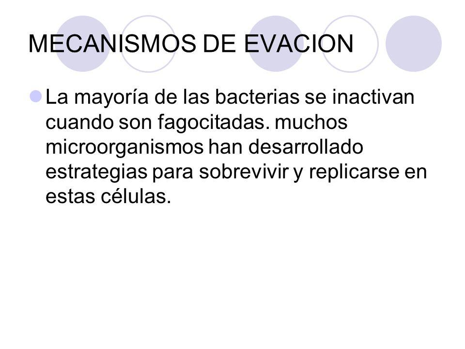 MECANISMOS DE EVACION La mayoría de las bacterias se inactivan cuando son fagocitadas. muchos microorganismos han desarrollado estrategias para sobrev