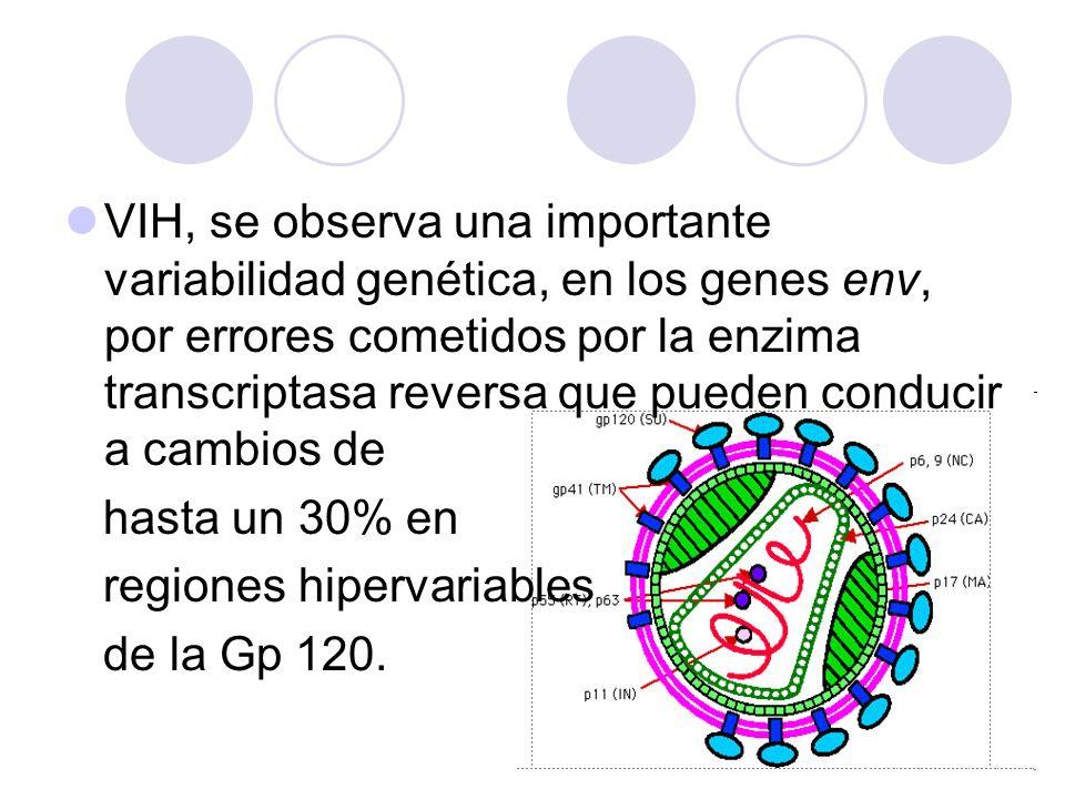 VIH, se observa una importante variabilidad genética, en los genes env, por errores cometidos por la enzima transcriptasa reversa que pueden conducir