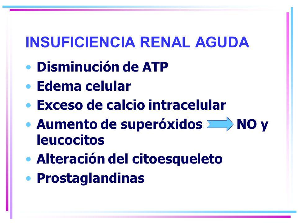 INSUFICIENCIA RENAL AGUDA Daño endotelio vascular Vasoconstricción Reflujo del filtrado glomerular uniones apretadas Obstrucción tubular Retroalimentación túbulo- glomerular IL-1, TNF-a