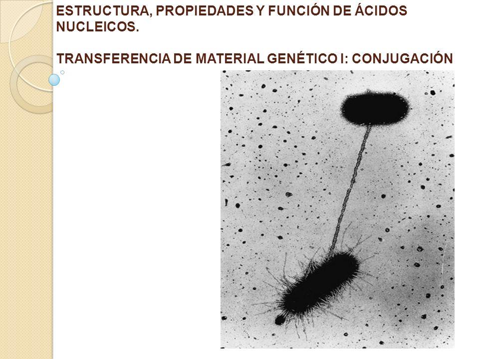 ESTRUCTURA, PROPIEDADES Y FUNCIÓN DE ÁCIDOS NUCLEICOS.