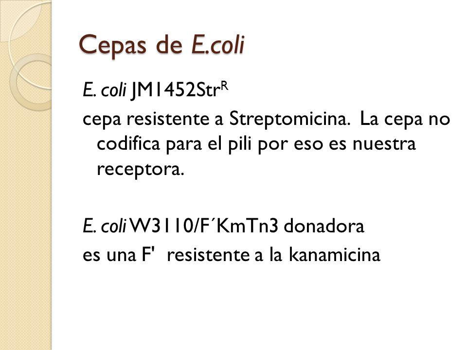 Cepas de E.coli E.coli JM1452Str R cepa resistente a Streptomicina.