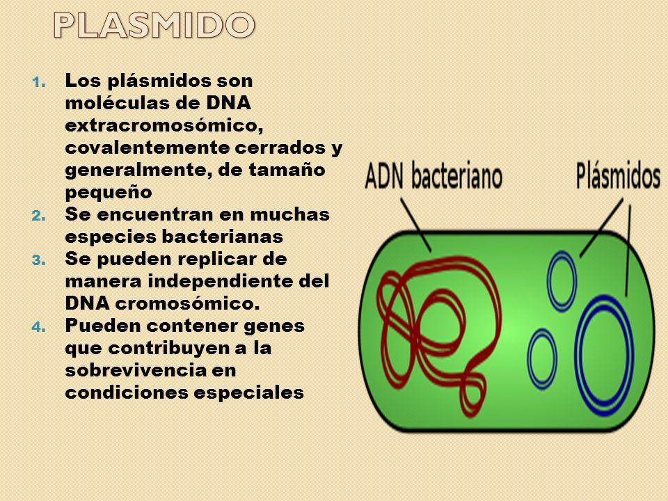 Algunos plásmidos tienen la capacidad de integrarse en el cromosoma: episomas.