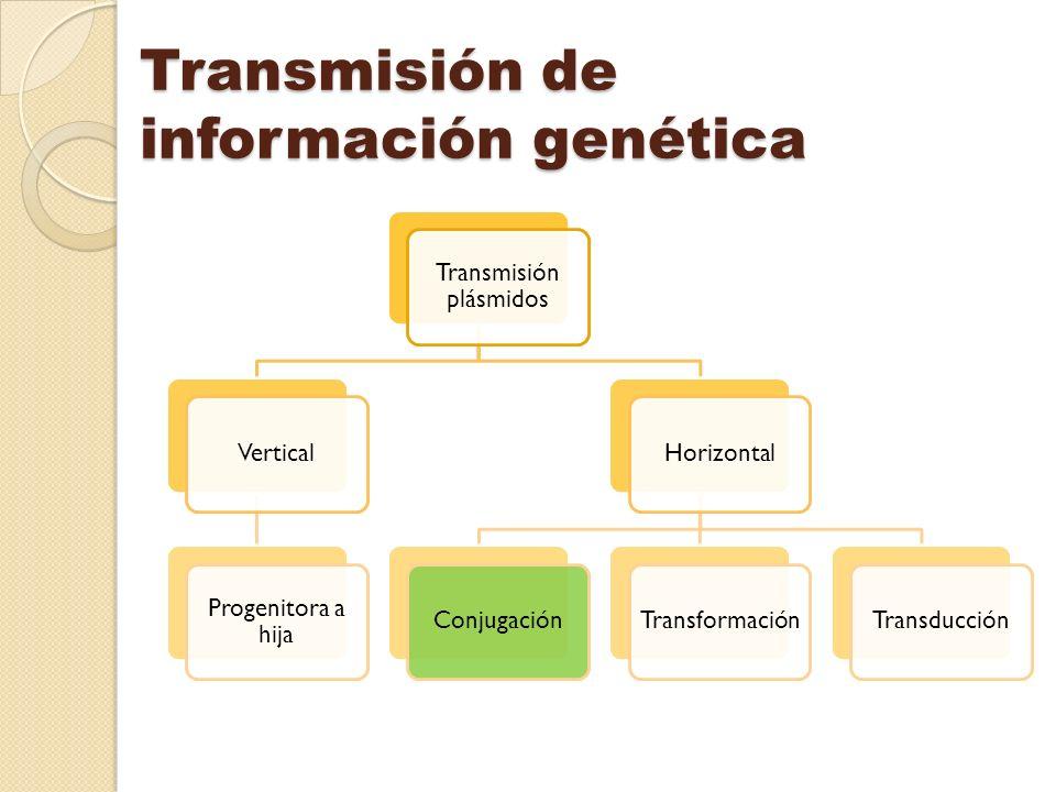 Transmisión de información genética Transmisión plásmidos Vertical Progenitora a hija HorizontalConjugaciónTransformaciónTransducción