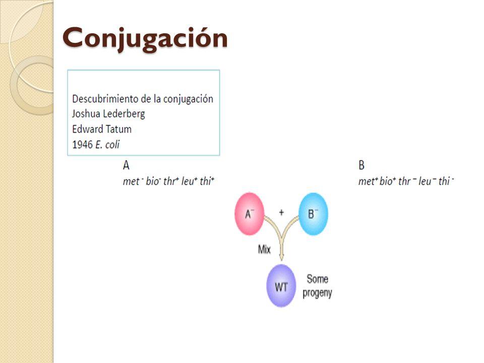Prototrofos consecuencia de intercambio genético y recombinación frecuencia 1/107