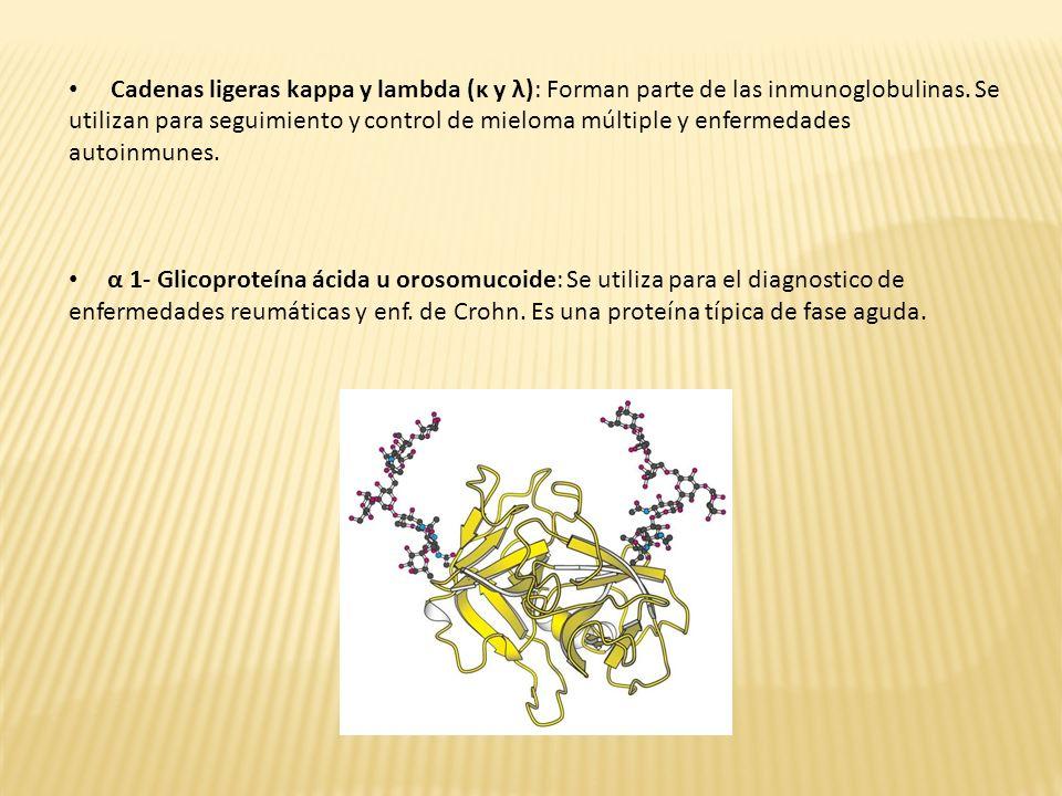 Cadenas ligeras kappa y lambda (κ y λ): Forman parte de las inmunoglobulinas. Se utilizan para seguimiento y control de mieloma múltiple y enfermedade
