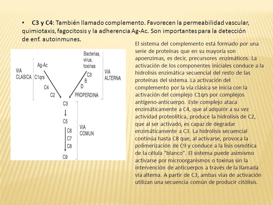 C3 y C4: También llamado complemento. Favorecen la permeabilidad vascular, quimiotaxis, fagocitosis y la adherencia Ag-Ac. Son importantes para la det