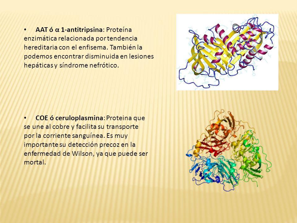AAT ó α 1-antitripsina: Proteína enzimática relacionada por tendencia hereditaria con el enfisema. También la podemos encontrar disminuida en lesiones