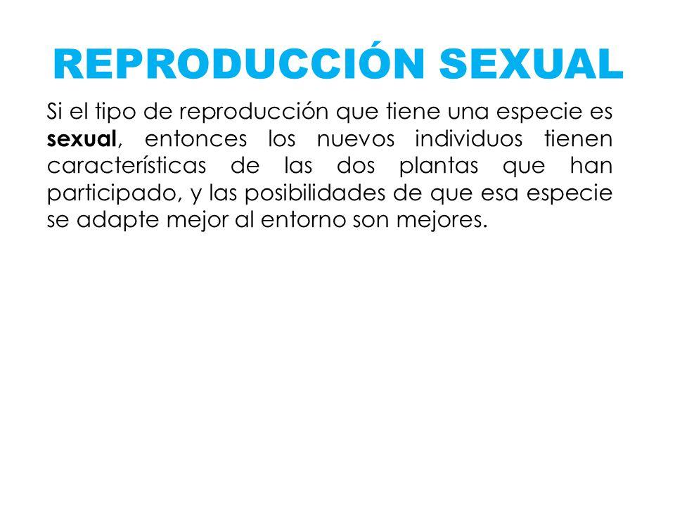 REPRODUCCIÓN SEXUAL Si el tipo de reproducción que tiene una especie es sexual, entonces los nuevos individuos tienen características de las dos plant
