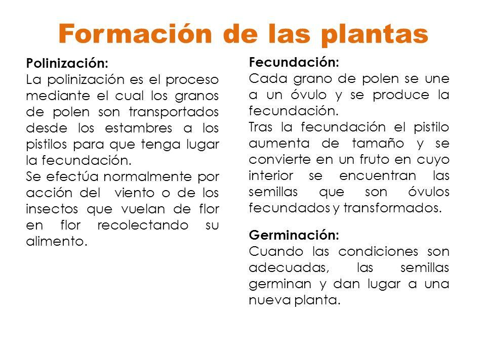 Formación de las plantas Polinización: La polinización es el proceso mediante el cual los granos de polen son transportados desde los estambres a los