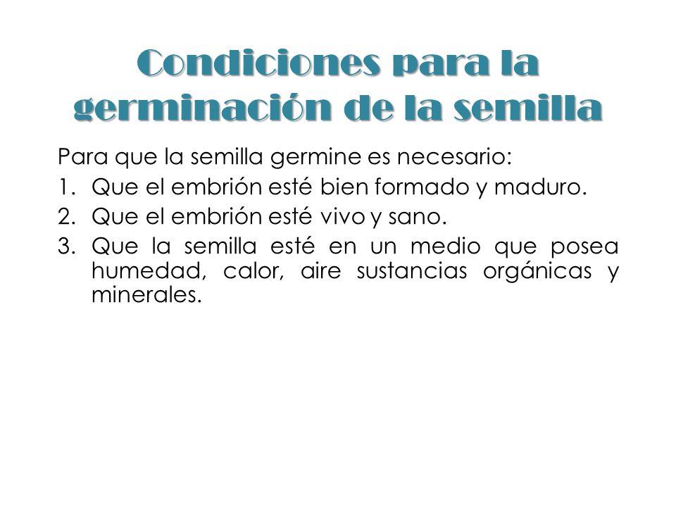 Condiciones para la germinación de la semilla Para que la semilla germine es necesario: 1.Que el embrión esté bien formado y maduro. 2.Que el embrión