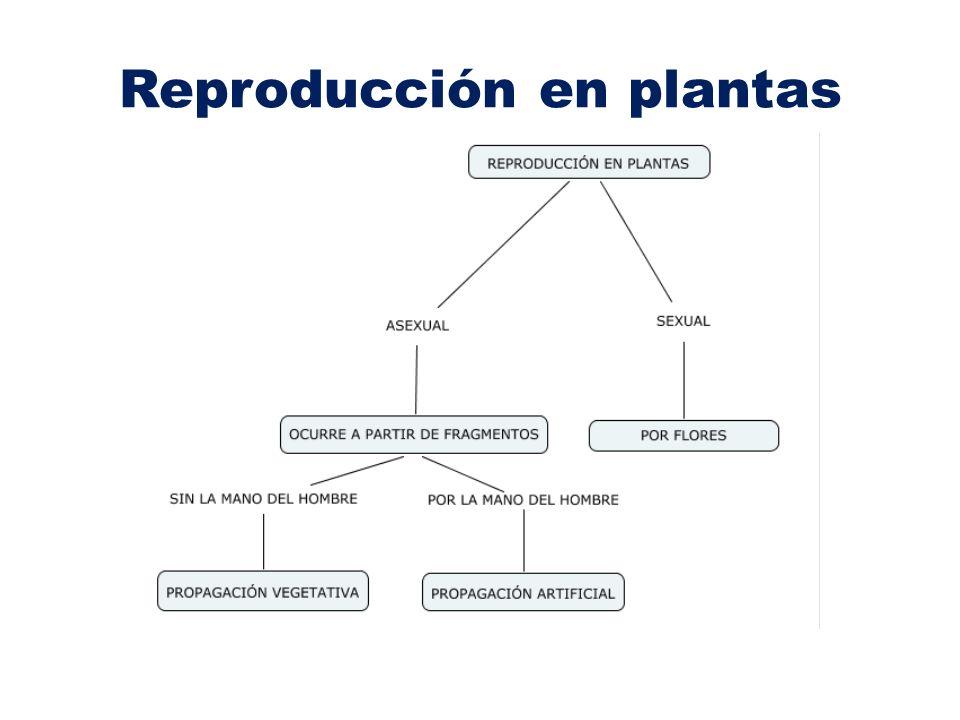 Tipos de reproducción en plantas Existen 2 tipos de reproducción en plantas: 1.La reproducción asexual.