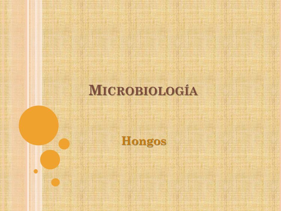 L OS HONGOS Microorganismos eucarioticos quimioorganotroficos Reproducción por medio de esporas: sexual y asexual No tienen clorofila Cuerpos alargados o filamentosos Pared celular que posee quitina y celulosa Micrografía electrónica de esporas Rhizopus stolonifer