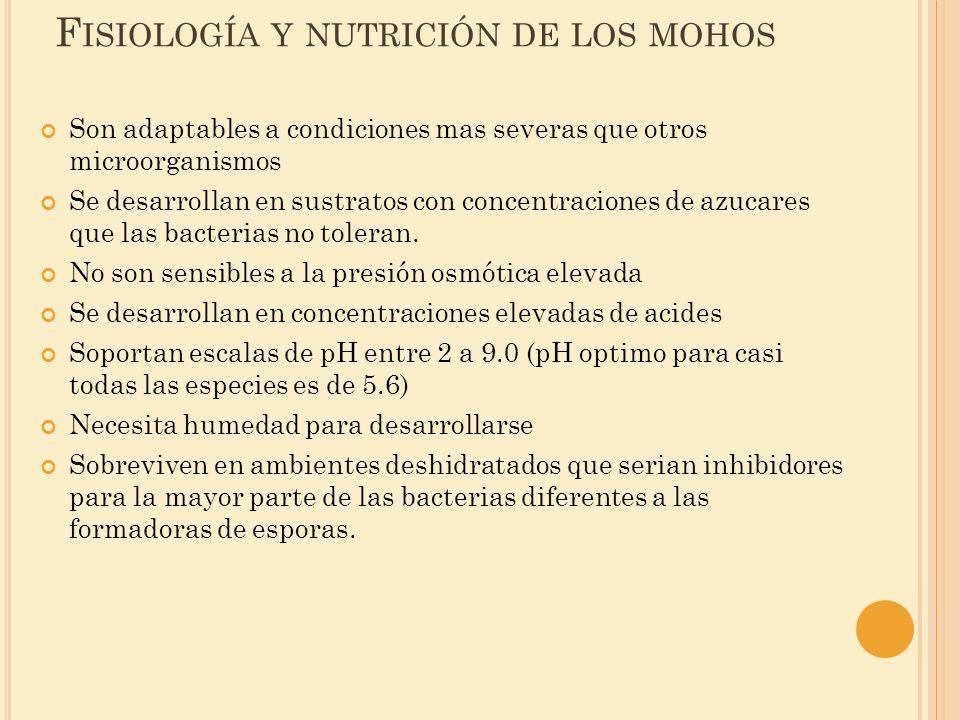 F ISIOLOGÍA Y NUTRICIÓN DE LOS MOHOS Son adaptables a condiciones mas severas que otros microorganismos Se desarrollan en sustratos con concentracione