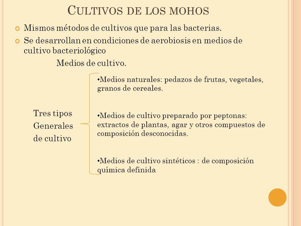C ULTIVOS DE LOS MOHOS Mismos métodos de cultivos que para las bacterias. Se desarrollan en condiciones de aerobiosis en medios de cultivo bacteriológ