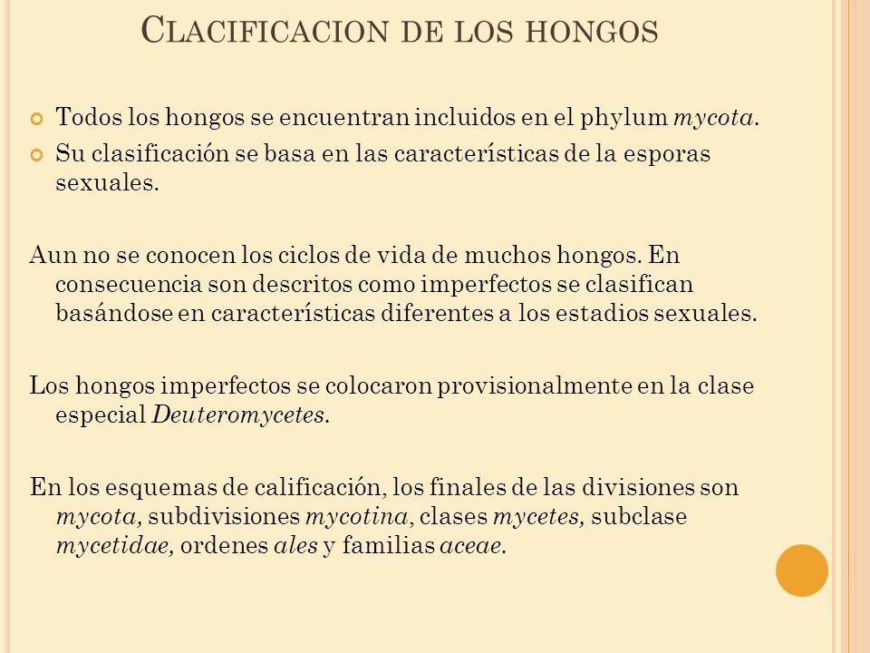C LACIFICACION DE LOS HONGOS Todos los hongos se encuentran incluidos en el phylum mycota. Su clasificación se basa en las características de la espor