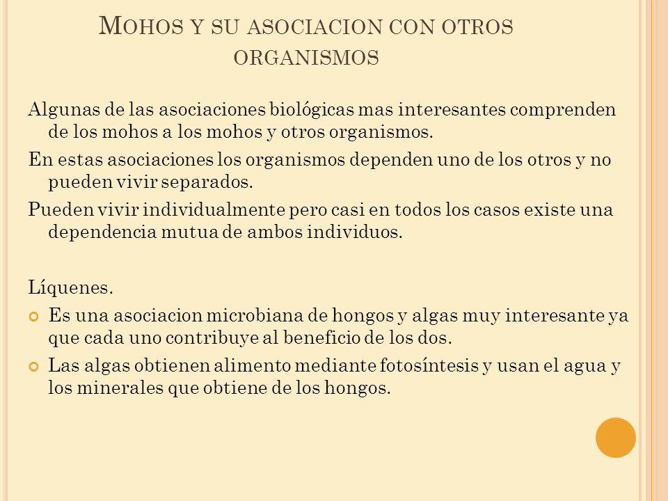 M OHOS Y SU ASOCIACION CON OTROS ORGANISMOS Algunas de las asociaciones biológicas mas interesantes comprenden de los mohos a los mohos y otros organi