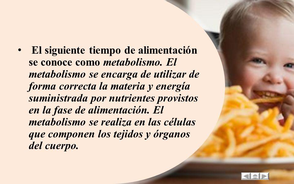 La nutrición se puede desglosar en tres fases o etapas las cuales todos nosotros experimentamos. En primera instancia, tenemos la Alimentación. Este t