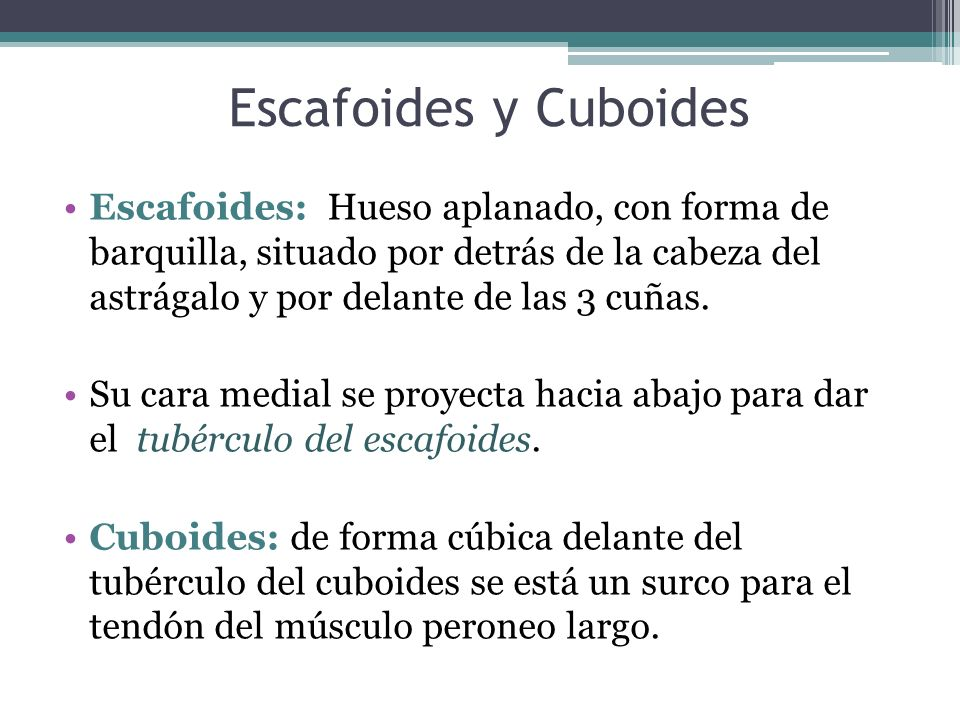 Escafoides y Cuboides