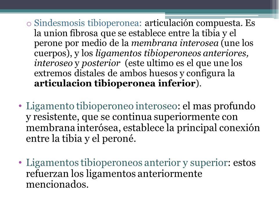 o Sindesmosis tibioperonea: articulación compuesta. Es la union fibrosa que se establece entre la tibia y el perone por medio de la membrana interosea