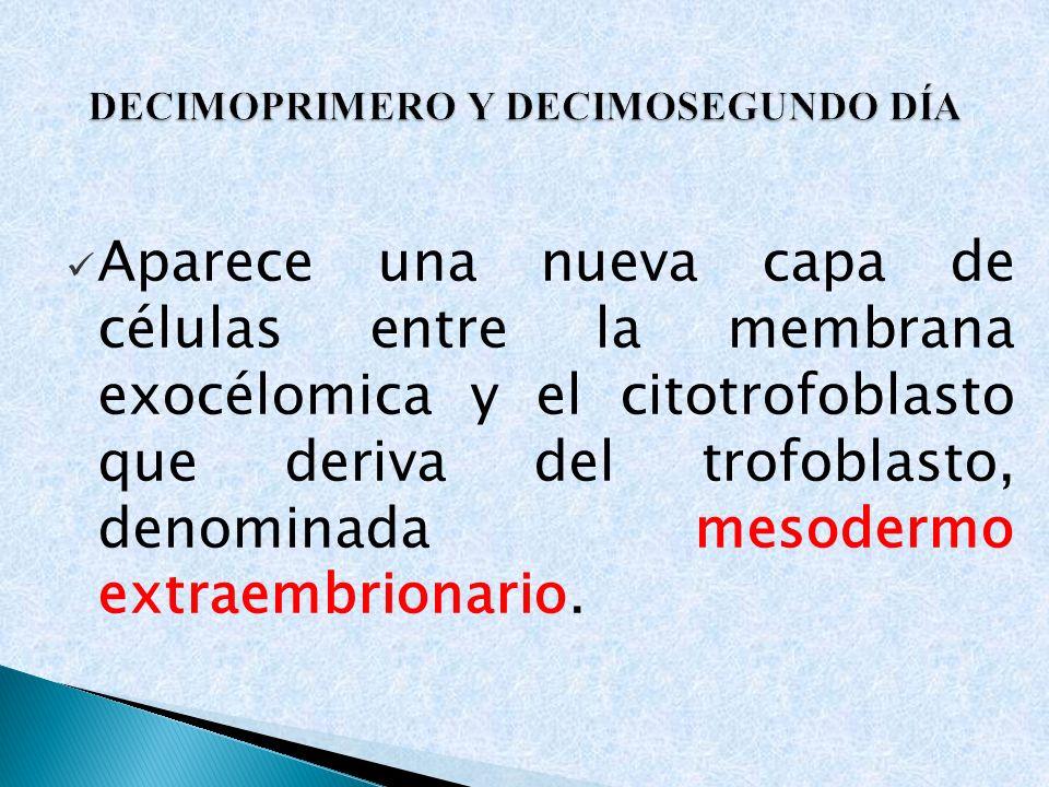 Aparece una nueva capa de células entre la membrana exocélomica y el citotrofoblasto que deriva del trofoblasto, denominada mesodermo extraembrionario